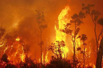 Raging bushfire with flames as tall as the trees